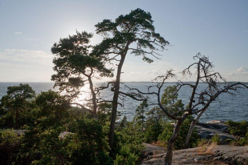 Maahanmuuttajia kotoutetaan nyt myös Suomessa uudella tavalla, kun heitä viedään säkkipimeään metsään – tästä on kyse