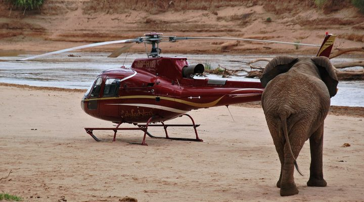 LKS 20160926 LKS 20150919  PM01; TO GO WITH STORY BY PETER MARTEL An elephant approaches a helicopter in Samburu game reserve on September 15, 2015. As elephant poaching in Africa by organised crime gangs using high-tech equipment rises, those working to stop their extinction in the wild have turned to technology too. In the remote wilds of northern Kenya's Samburu reserve, the latest technology from US-giant Google creates three-dimensional maps using data from satellite tracking elephant collars, providing security for the animals in the short term, and helping protect their habitat in the long term. LEHTIKUVA / AFP PHOTO / PETER MARTEL